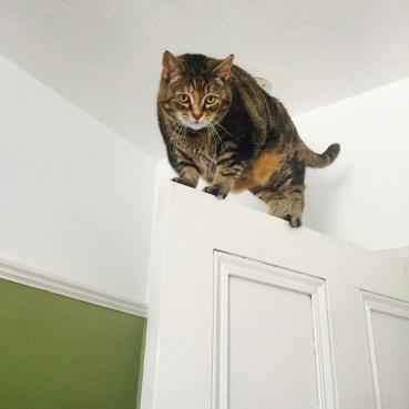 Cat standing on a door