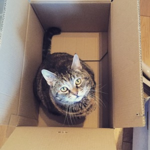 Cookie the cat in a cardbpard box