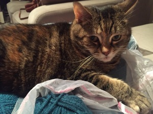 Cat lyig on bag of yarn